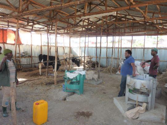 Milchproduktion 1